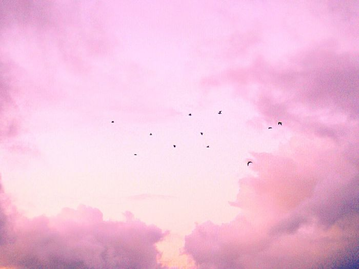 Flying Bird Sky Low Angle View No People Flock Of Birds Cloud - Sky Pink Color Nature Outdoors Large Group Of Animals Day Animal Themes Sunset Animals In The Wild Migrating