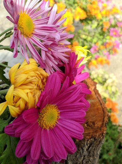 Close-up of fresh pink flower in garden