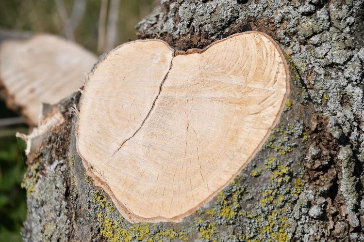 Herz aus Holz Heart Holz Baum Tree