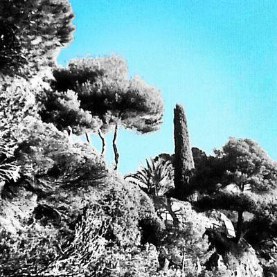 Amb aquest vent, cel clar Lloretdemar Igersgirona Incostabrava Natura arbres catalunyafotos catalunyaexperiencie