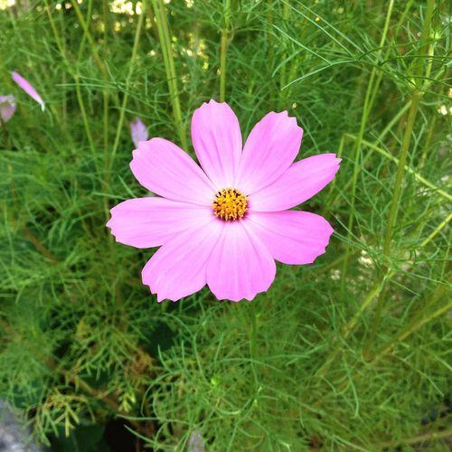 Flowers Namaste Ashram Monroe, New York