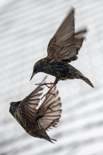 Close-up of bird flying in mid-air