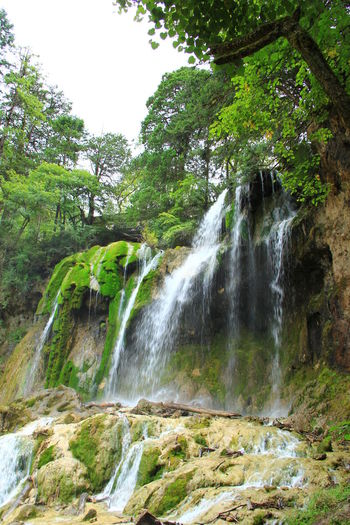 Tree Waterfall Beauty In Nature Scenics - Nature Forest Nature No People Non-urban Scene Outdoors Power In Nature Falling Water