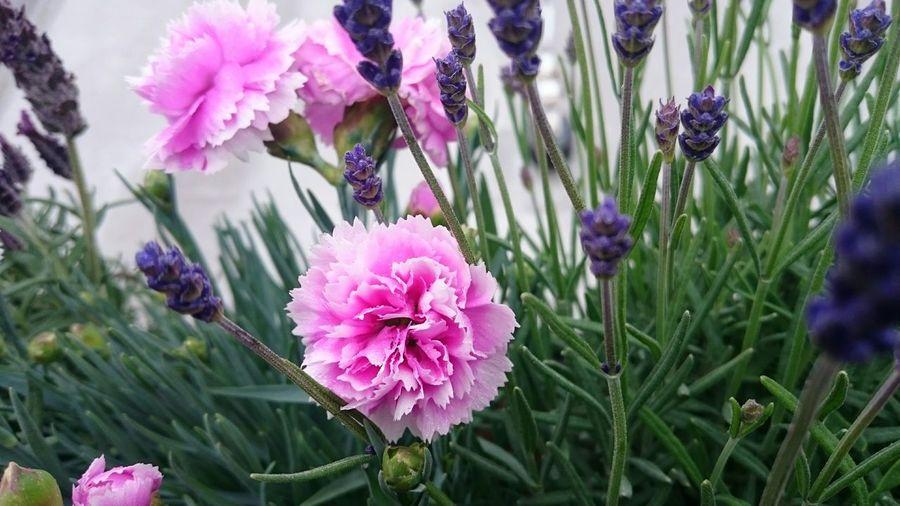 Flowers we