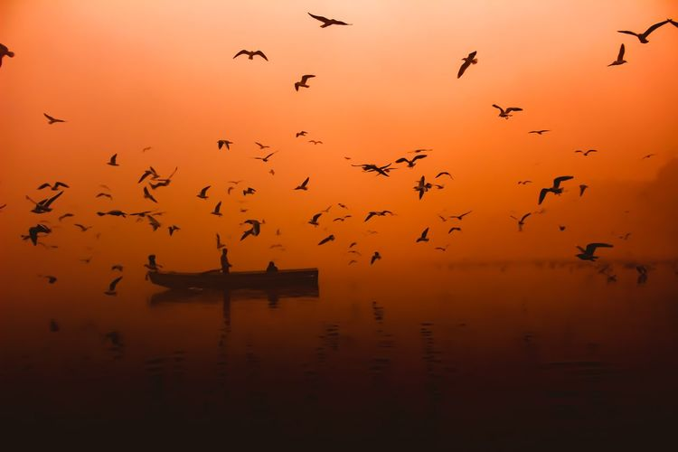 Flock Of Birds Flying Over Boat On Lake Against Orange Sky