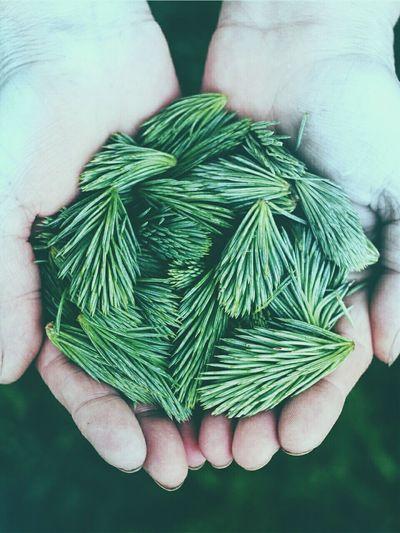 Verde Naturesa Preserve Vida Life