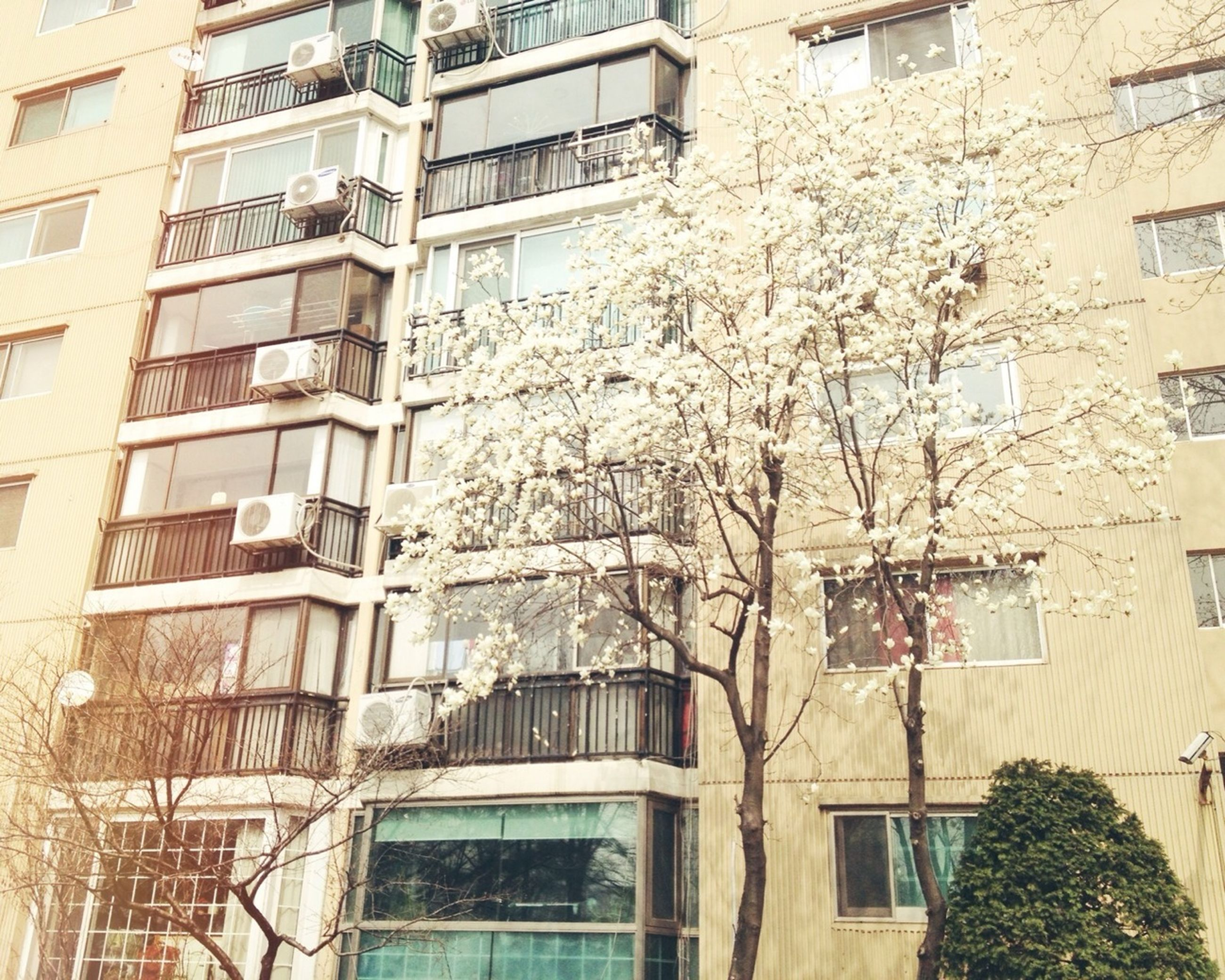 building exterior, architecture, built structure, window, residential building, residential structure, building, house, tree, low angle view, city, apartment, bare tree, balcony, day, outdoors, branch, glass - material, no people, brick wall