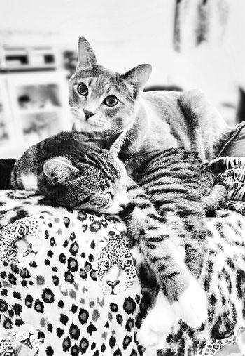 Hello Mama, what you doing awake so early? Cute Pets Tadaa Community Mel&BomBi Cat