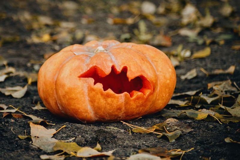 Close-up of pumpkins on autumn leaf