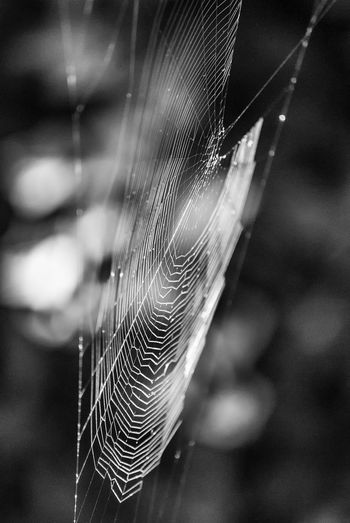 The trap Spiders Web Spiderweb Net Trap Blackandwhite Black And White Nature_collection Nature Southsea Hampshire  England Spider Web Web Close-up