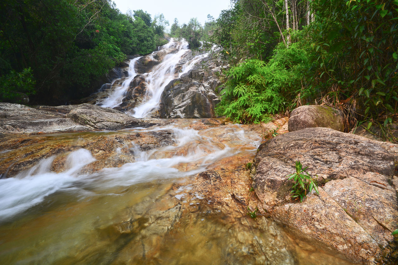 tree, plant, forest, beauty in nature, motion, scenics - nature, rock, water, waterfall, flowing water, nature, land, long exposure, rock - object, no people, solid, growth, blurred motion, non-urban scene, flowing, outdoors, power in nature, rainforest