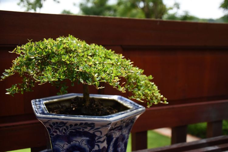 Close-up of small potted plant in balcony
