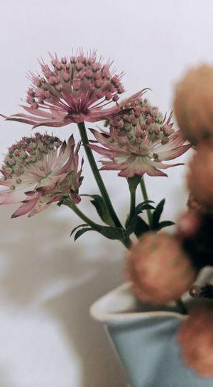 Flower Head Flower Tree Springtime Defocused Branch Blossom Orchid Pink Color Vase