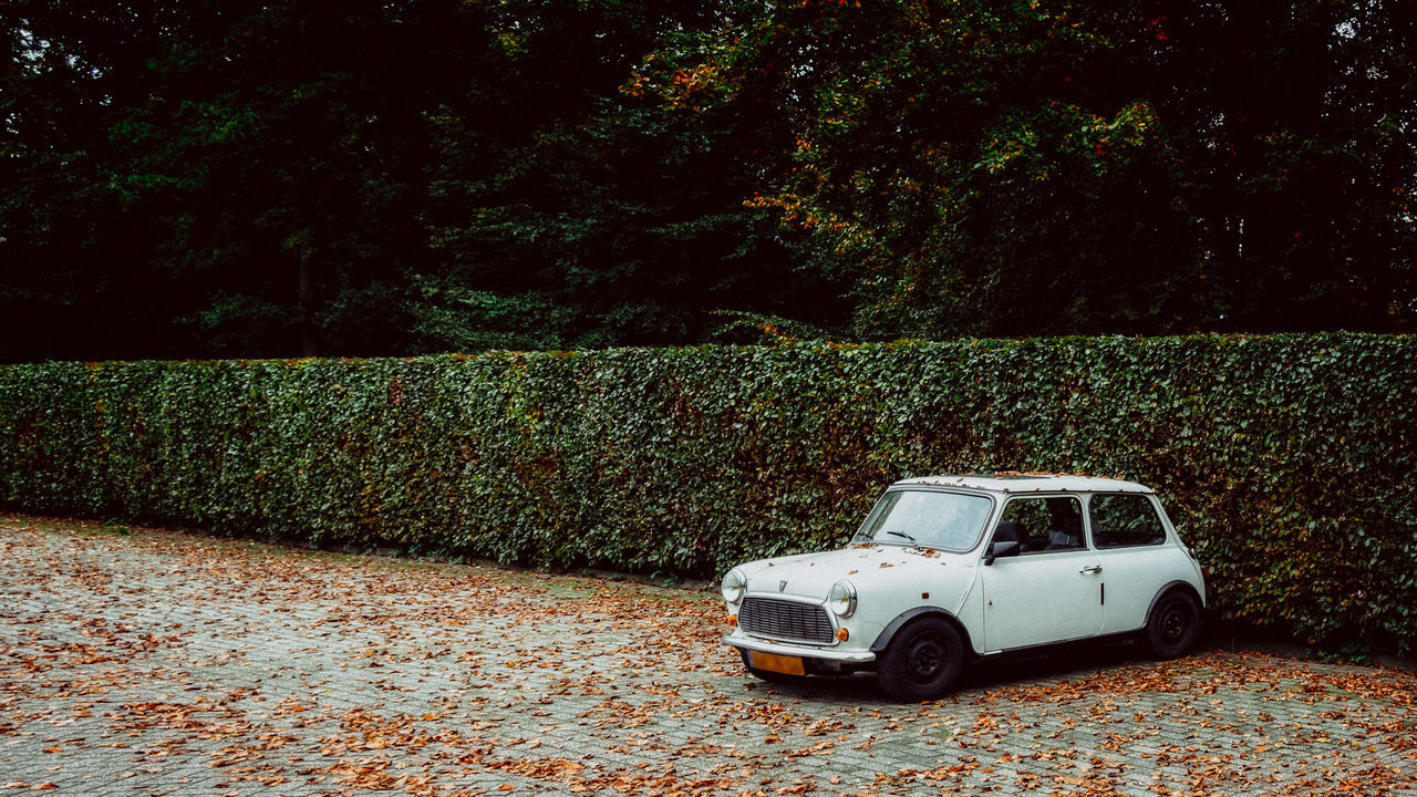 car, transportation, land vehicle, day, no people, tree, outdoors, toy car, nature