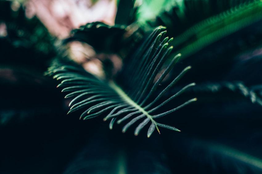 Beauty In Nature Bokeh Close-up Copy Space Day Fern Foliage Freshness Frond Green Color Growth Leaf Nature Outdoors Plant Selective Focus Vintage The Week On EyeEm