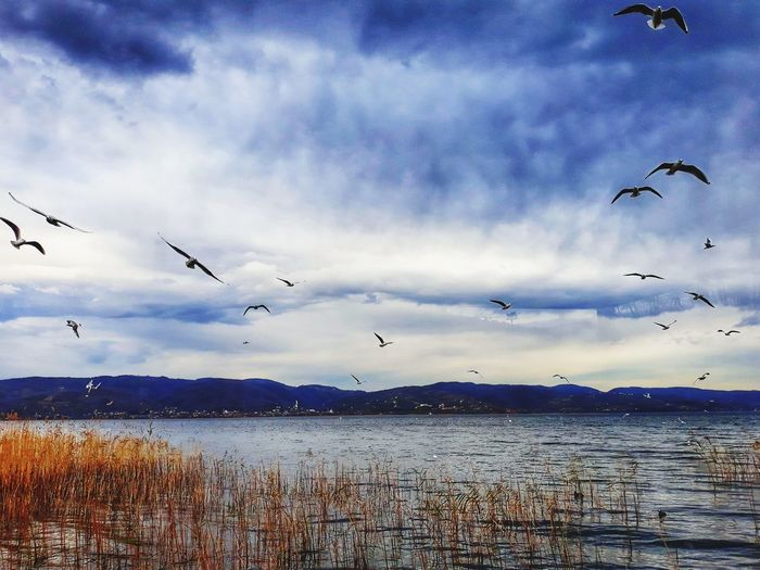 Flying Animal Wildlife Bird Flock Of Birds Animals In The Wild Cloud - Sky Nature Sky Water Day No People Beauty In Nature Sea Large Group Of Animals Animal Themes