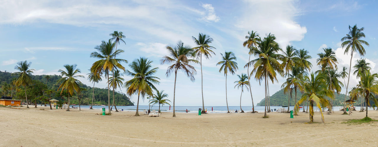 Panoramic view of palm trees on beach against sky