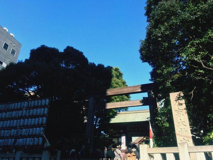 初詣 Kaoriiiinya New Year Paper Lantern Japanese Lantern People Matchmaking Marriage  Worship TORII Torii Gate Shrine Temple Temple Architecture Tree City Sky Architecture Built Structure