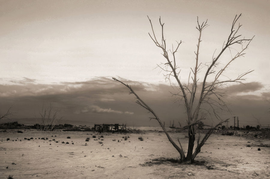 Apocalyptic Bare Tree Beauty In Nature Calm Cloud Cloud - Sky Cloudy Day Grass Idyllic Lakeshore Landscape Nature No People Non Urban Scene Non-urban Scene Outdoors Overcast Remote Salton Sea Scenics Sky Tranquil Scene Tranquility Water