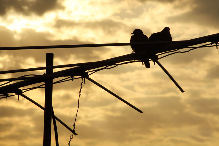 Low Angle View Of Silhouette Birds Perching On Cable Against Sky