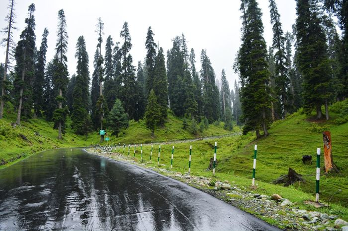 Road To Gulmarg Tree Green Color Nature The Way Forward Outdoors Sky Scenics Forest Day No People Grass Beauty In Nature IExploreKashmir Kashmir Nature EyeEm Best Shots EyeEm Best Shots - Landscape Beauty In Nature Himalayas Mountains And Sky Travel Destinations Mountain Revoshots Pakistan Lahore
