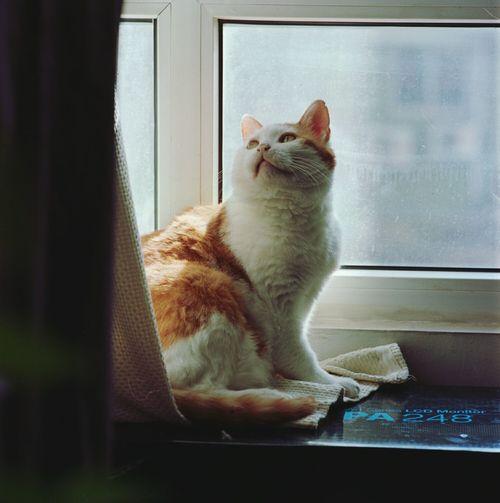 胖胖 Mamiya C330 Kodakportra400 Cat
