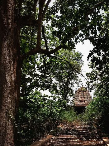 Tree Day Outdoors No People Growth Nature Full Frame Branch Close-up Beauty In Nature Temple Templephotography Jungle Jungleshoot Abandoned Places Abandoned Canopy Of Trees Forbidden Places Indiashot Indiaclicks Denseforest Greenery Concrete Darkwoods Haunted
