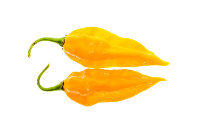 Ripe fresh fatalii yellow chili hot pepper with green stem isolated on white background Capsicum Annuum Chili Pepper Hot Capsaicin Capsicum Capsicum Chinense Capsicum Pepper Chili  Chilli Close-up Fatalii Fatalii Yellow Food Freshness Fruit Hot Peppers Organic Organic Food Pepper Peppers Studio Shot White Background Yellow