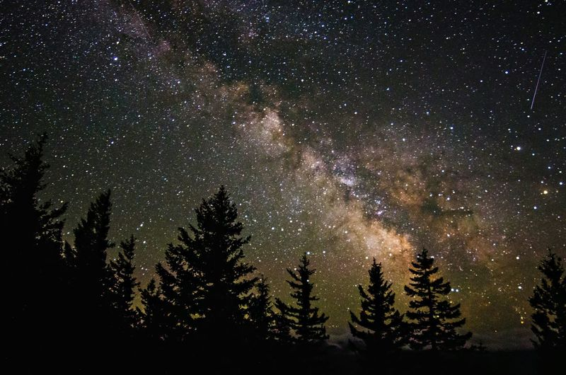 Low Angle View Of Trees Against Starry Sky