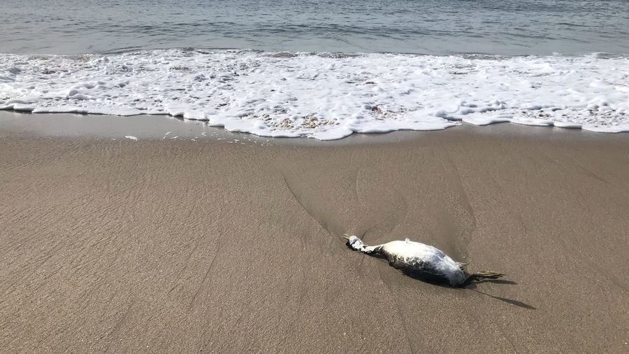 Death Pollution Sad Dead Bird Los Angeles, California Pacific Ocean Bird Sea Life Dead Animal Death Beach Land Sand Sea Water Animal One Animal Nature Wave Beauty In Nature