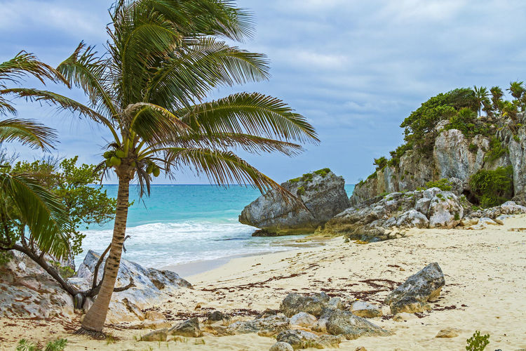 Water Sea Beach Land Sky Tree Beauty In Nature Plant Palm Tree Tropical Climate Scenics - Nature Nature Cloud - Sky Tranquility Tranquil Scene Growth Day Rock Sand Horizon Over Water No People Outdoors Coconut Palm Tree Tulum, Mexico