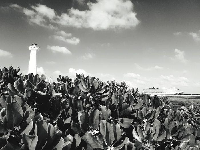 Faro #mexico #beach Nature Cloud - Sky Plant Sky Day Outdoors Growth