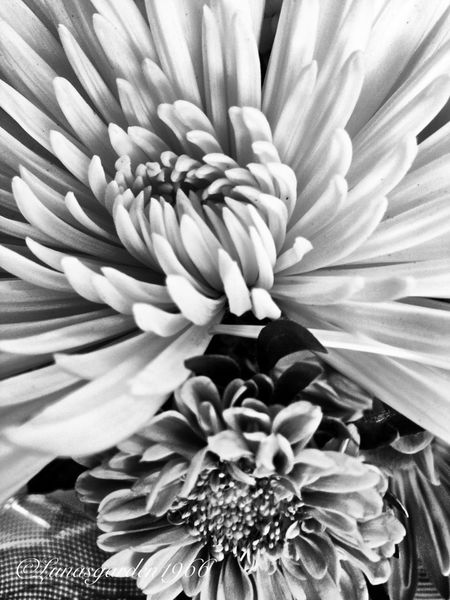 Flowers Blackandwhite Fortheloveofblackandwhite HDRInfection