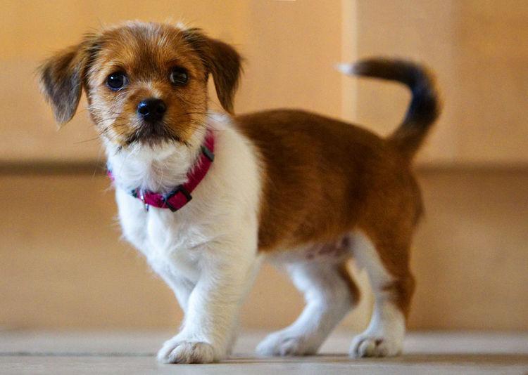 A cute pet