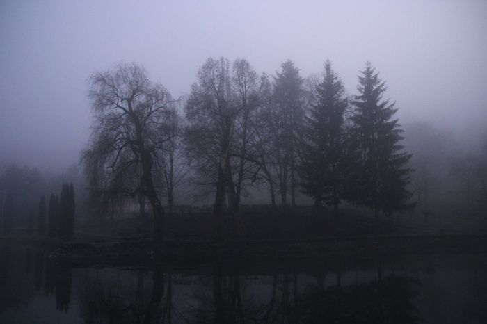 Athmosphere Clouds And Sky Dog Fog Grey Hungary Nature No People Pond Trees Winter