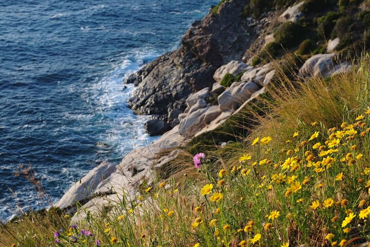 Rock - Object Nature Sea High Angle View No People Beauty In Nature Day Water Outdoors Animal Themes Flower One Animal Mammal Scenics Cliff Plant Animals In The Wild Sky