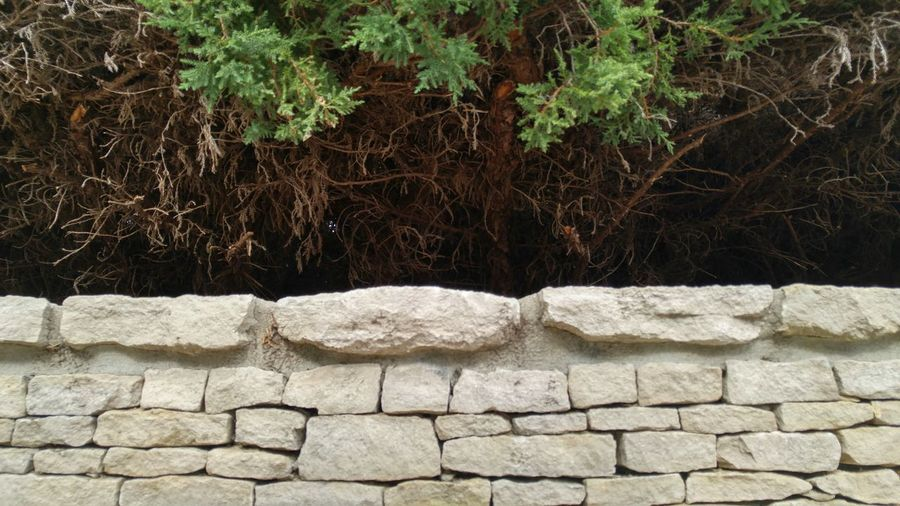 TakeoverContrast Stone Wall Stone Architecture Nature Outdoors Beauty In Nature Green White Stonework Stone Material Wall Indiana University No People Day Evergreen Evergreen Tree Evergreen Trees Contrasting Textures Contrast Contrasts Shadow Limestone Limestone Walls Limestone Rocks