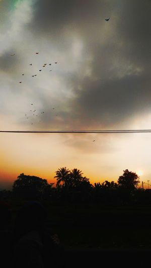 kites flying in the afternoon Silhouette Kites Flying Kites In Motion INDONESIA Indonesia Photography  Kites Layangan PhonePhotography EyeEmNewHere EyeEm Selects Afternoon Bird Tree Flying Telephone Line Sunset Rural Scene Silhouette Flock Of Birds Dramatic Sky Sky Telephone Pole Power Line  Electricity Pylon