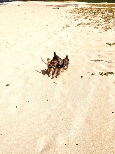 EyeEm Selects Beach Sand Dog Animal Themes High Angle View Domestic Animals Outdoors Pets Shadow Sunlight Sea Summer Day No People Nature Mammal First Eyeem Photo