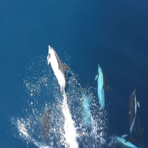 Dolphins DolphinShow Swimming Dancing Bestfriend Blue Sky Sea Sea Life Fish Animals In The Wild UnderSea Alboransea