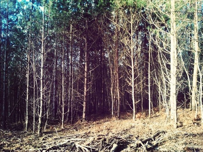 Nature Foret