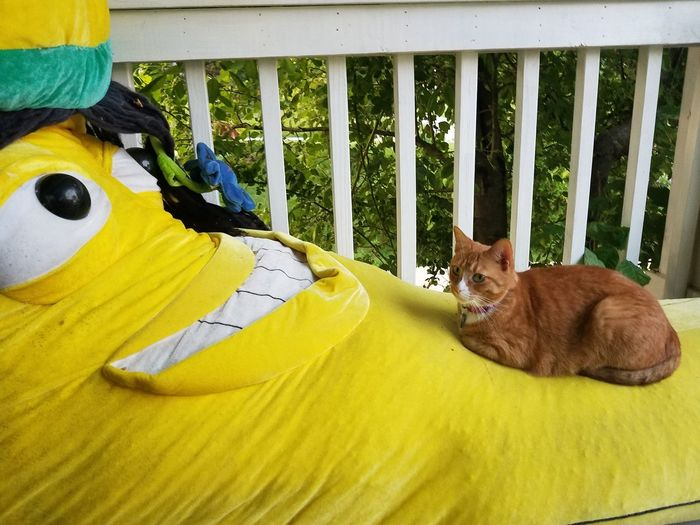 Porch Life Giant Banana RASTA Stuffed Toy Cat Lovers Yellow Banana Pets Relaxation Animal Themes Feline Domestic Cat Ginger Cat At Home Whisker Cat