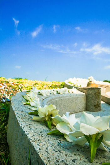 The ceremony of pay respect to ancestors in every early April of the year in Thailand. Adage; Ancestor; Asia; Burial; Cemetery; Ceremony; Chinese-graveyard; Chinese-tomb; Chinese; Coffin; Culture; Day Dead; Family; Grave; Memorial; Moral; Nature Outdoors Predecessor; Relative-date; Religion; Stone; Tomb; Tradition;