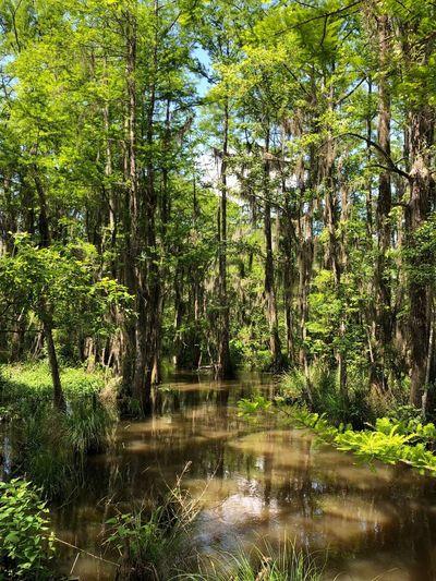 Swamp down in