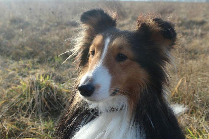 EyeEm Animal Lover I Love My Dog❤ Dog❤ Eyeem Animal Dog Portrait Animal My Dog Animal Portrait Animal Photography Dogs