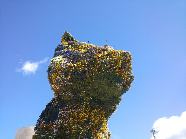 El ''Puppy'' in Bilbao Beauty In Nature Bilbao Bilbaocentro Bilbaoguge Bilbaolovers Blue Clear Sky Close-up Day El Flowers Green Color Growth Gugenheim Low Angle View Nature No People Outdoors Puppy Sky Spring Sunny Tranquility Tree