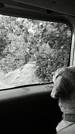 Man's Best Friend Black And White Dog Relaxing Enjoying The View