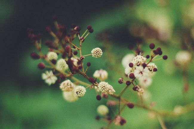 Beauty In Nature Blossom Branch Close-up Day Flower Flower Head Focus On Foreground Fragility Freshness Growth Nature No People Outdoors Plant Springtime Tree