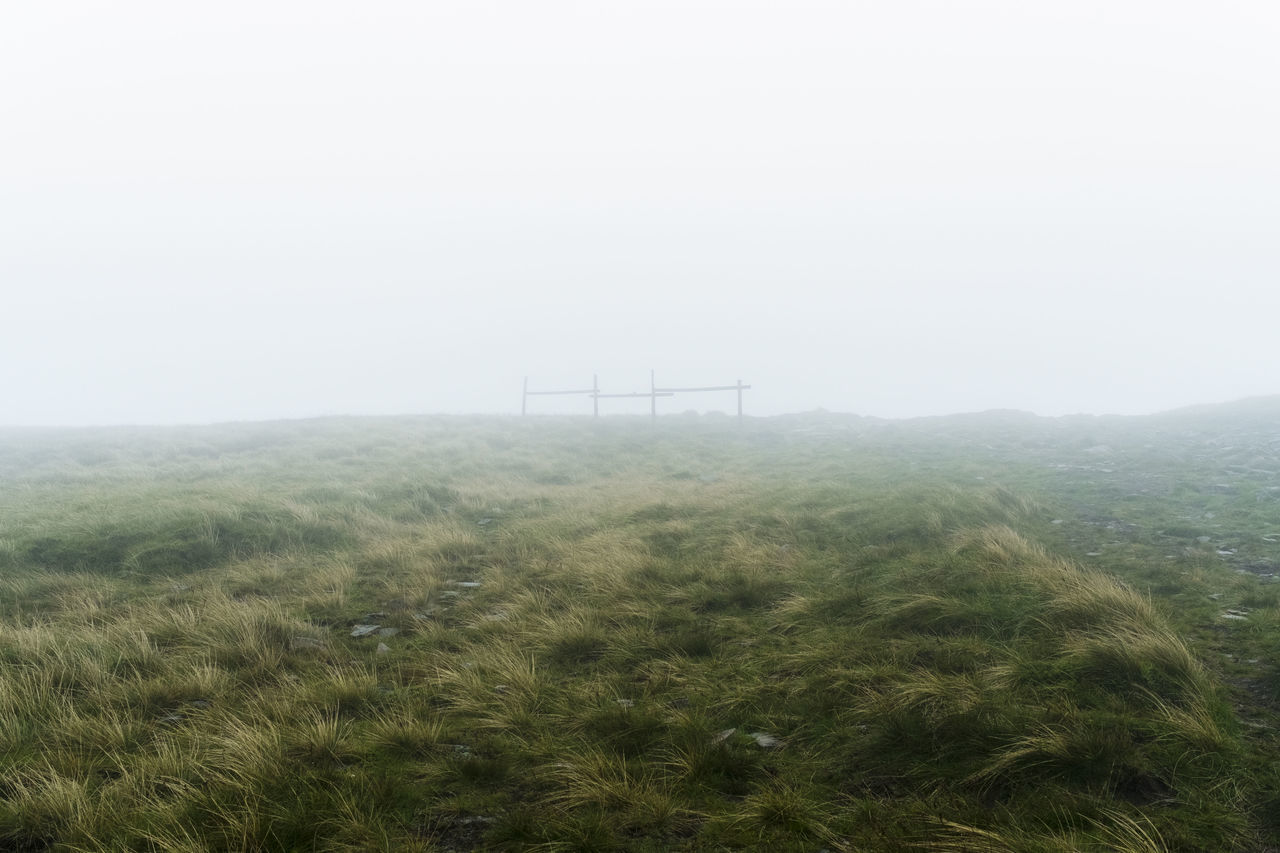Scenic View Of Grassy Field In Foggy Weather