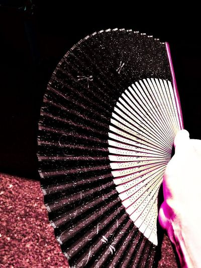 Folding Fan Photo Photography